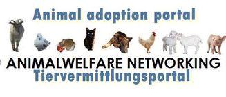 adoptionportal.jpg