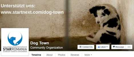 dogtown4